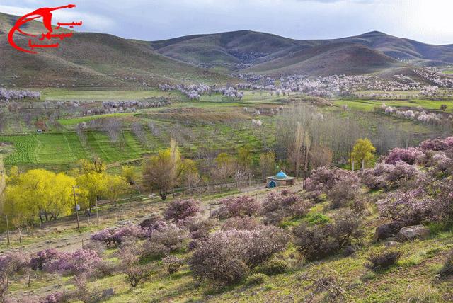 جنگل های استان چهارمحال و بختیاری