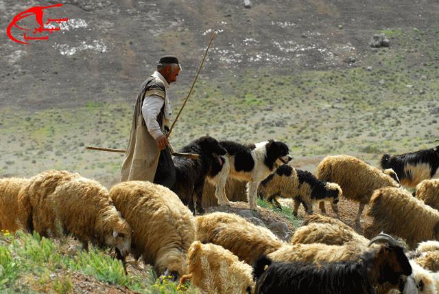 کوچ عشایر استان چهارمحال و بختیاری